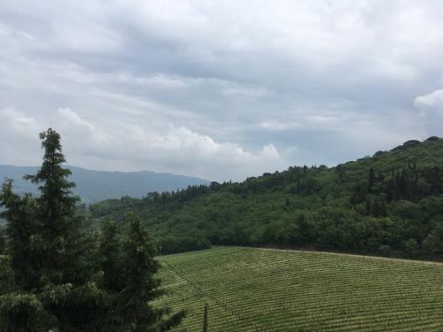 2018 CastelloDiVerrazzano 1