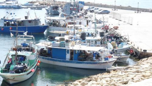 Cipru-Marine37