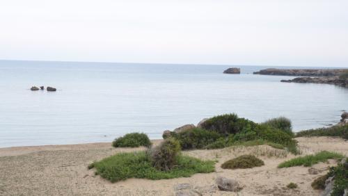Cipru-SeaBird84