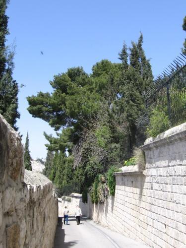 IERUSALIM-Gradina Ghetimani (03)
