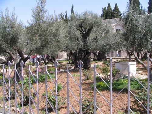 IERUSALIM-Gradina Ghetimani (09)