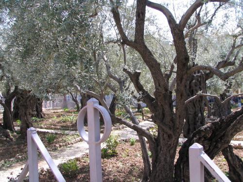 IERUSALIM-Gradina Ghetimani (10)