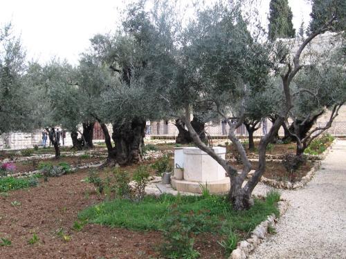IERUSALIM-Gradina Ghetimani (11)