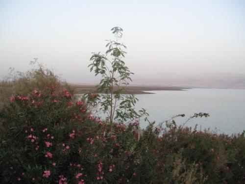 Marea Moarta (04)