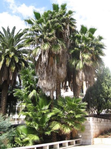 NAZARET-Biserica tuturor natiilor (7)